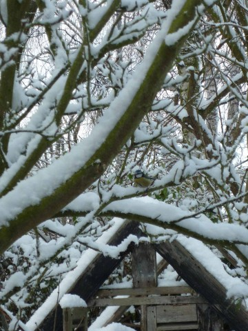 magnolia-et-cabane.jpg